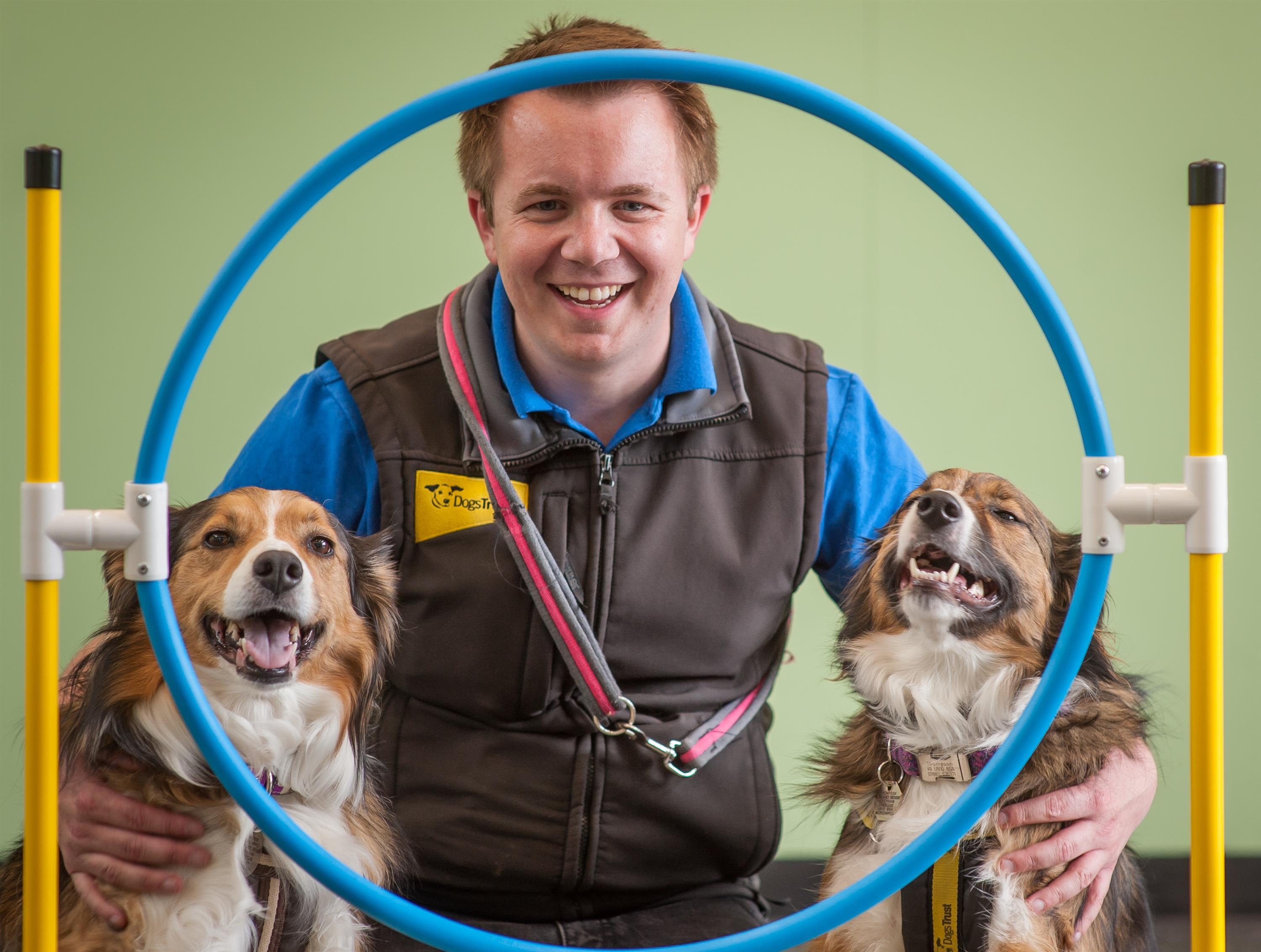 Dogs Trust Training And Behaviour Advisor