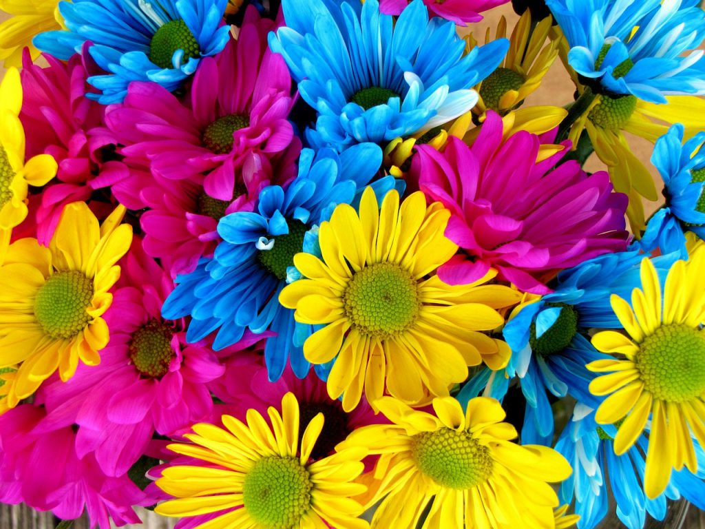 Refreshing flowers that you can present your loved ones with izmirmasajfo